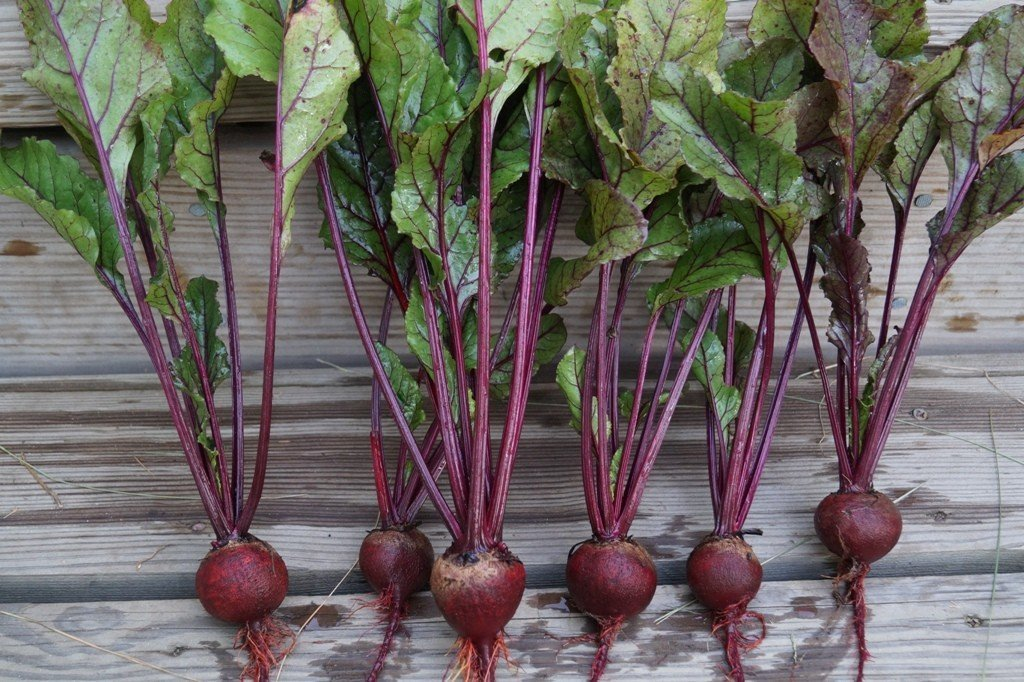 Beet Line (resized)