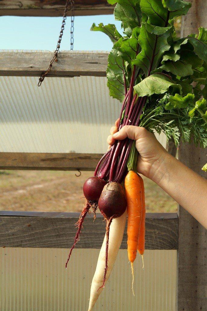 harvested veggies