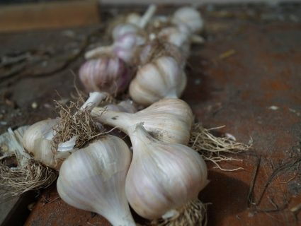 Table Garlic