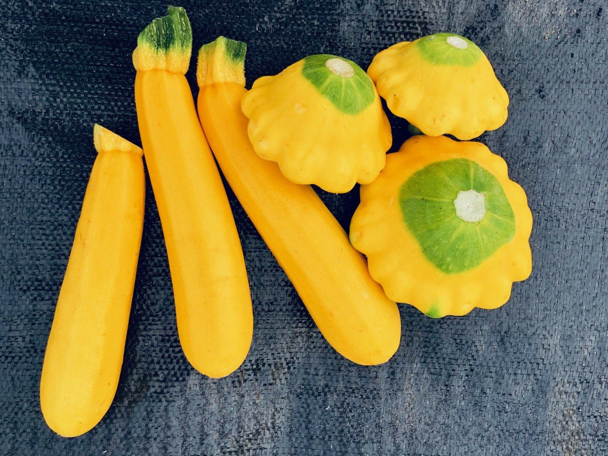 summer squash and patty pan squash