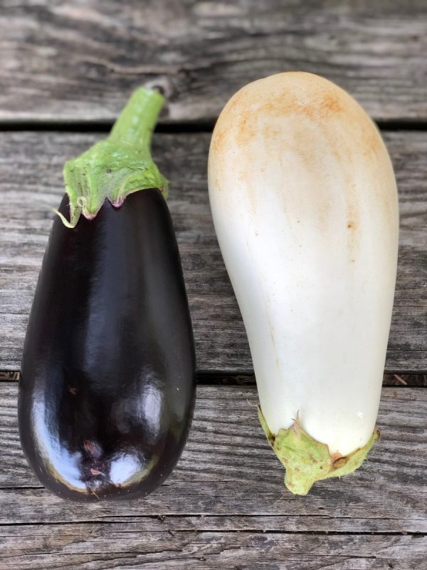 fresh eggplant black and white contrast