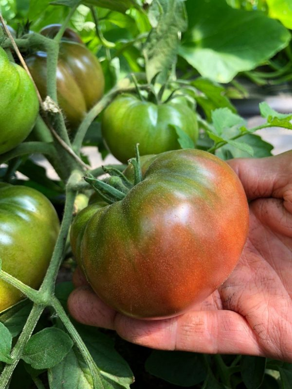 heirloom marnero tomato on the vine