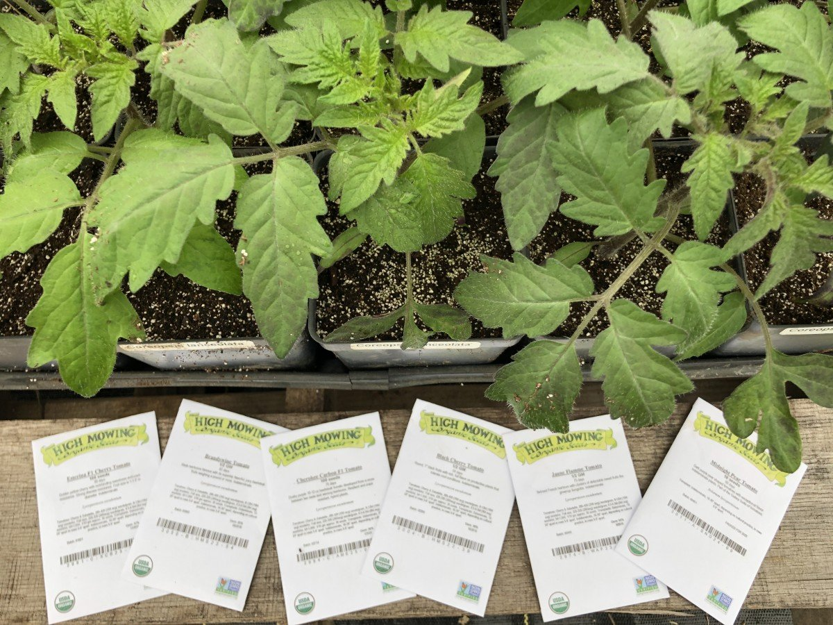 transplants and seed packets