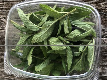 fresh mint in clamshell for farm stand