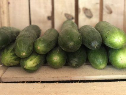 cucumbers in farm stand