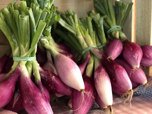 Tropea Onions