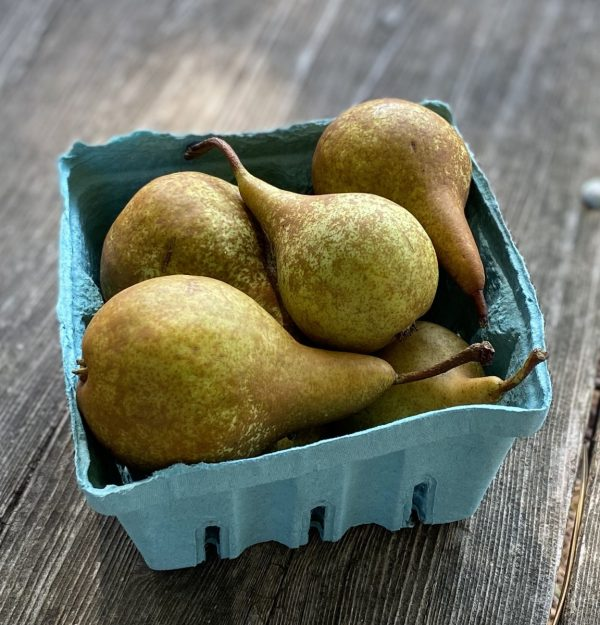 Bosc pear quart