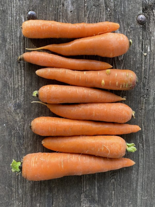 Fall Carrots