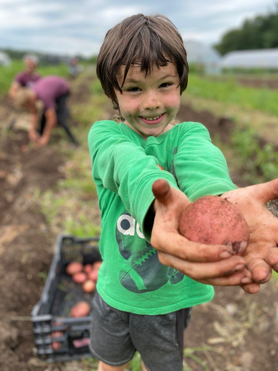 Arie picking potatoes 2020
