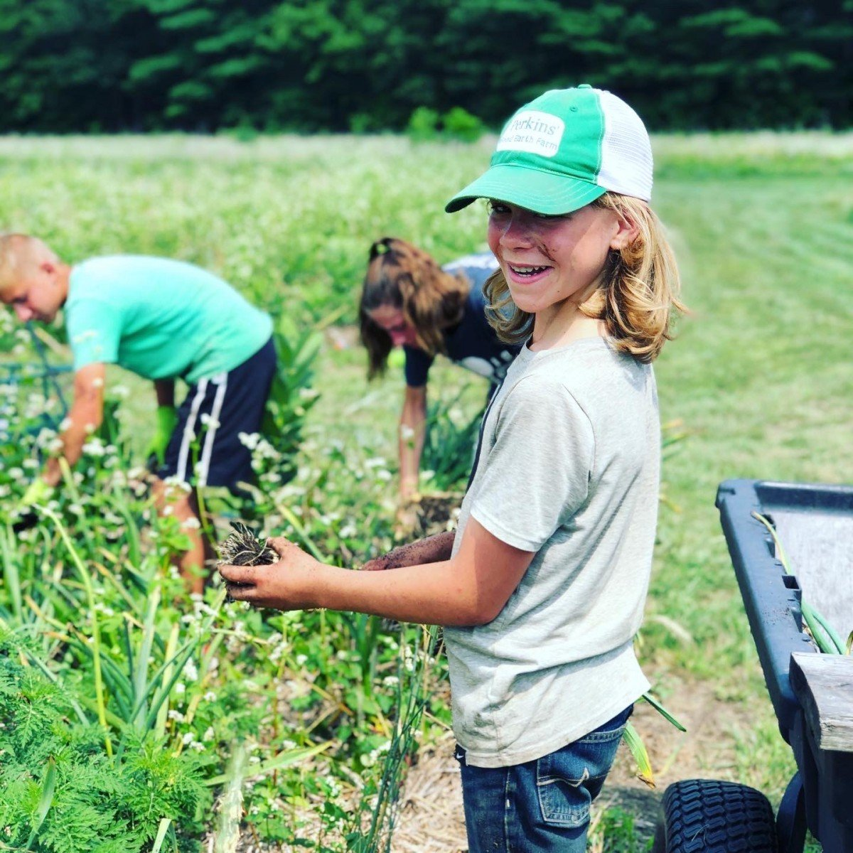 Harper harvesting garlic 2020