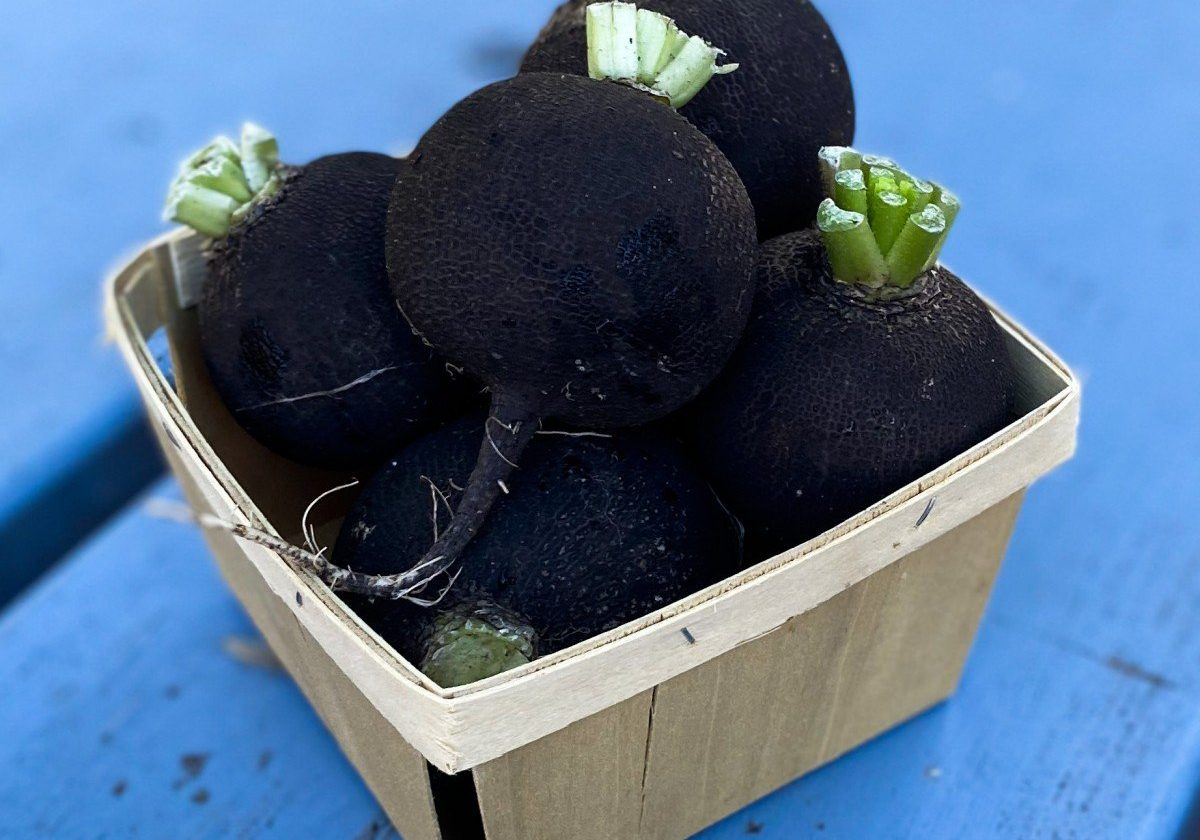 Black Radishes in quart