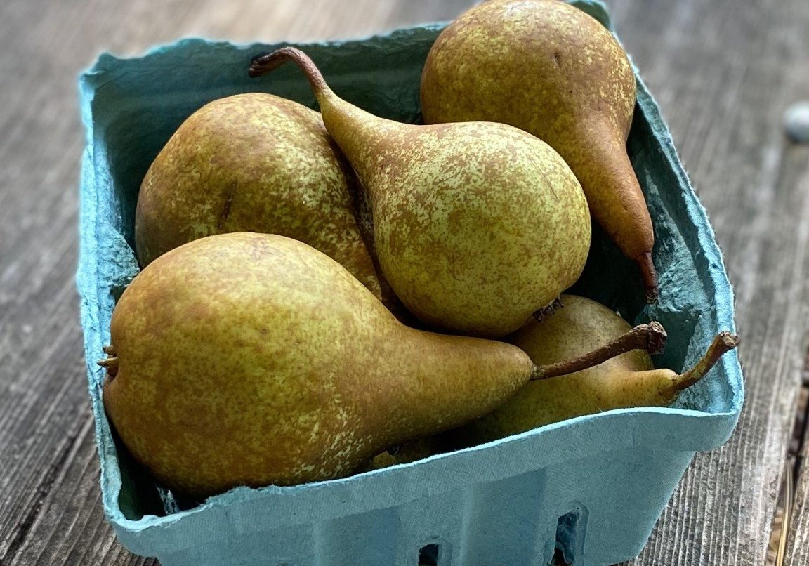 Bosc pear quart