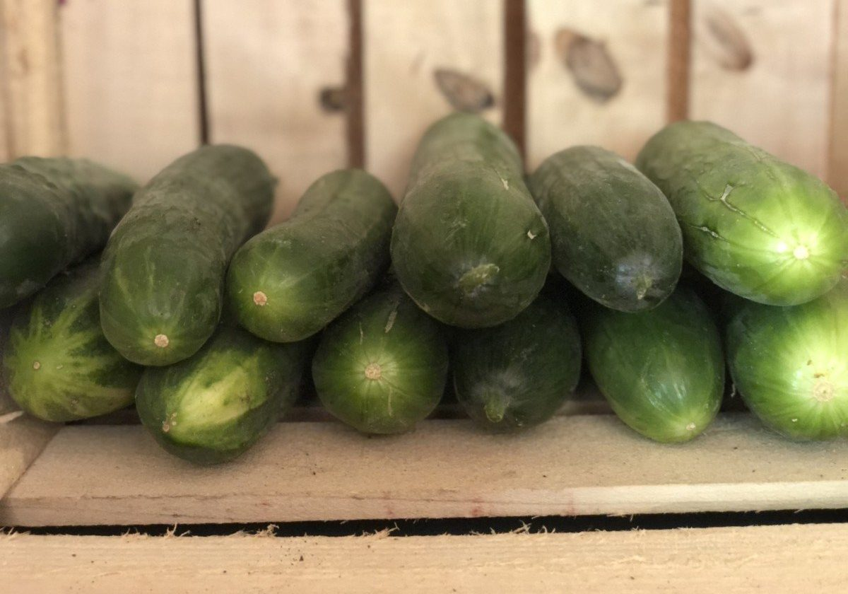 cucumbers in farm stand