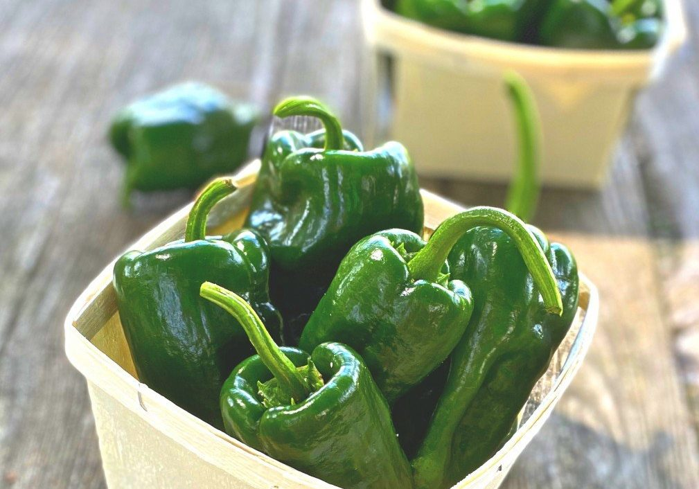 Pablano Peppers