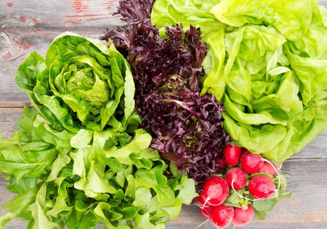 Overhead view of heads of assorted leafy fresh lettuce with a bunch of crisp red radishes arranged on old rustic wooden boards in a country kitchen